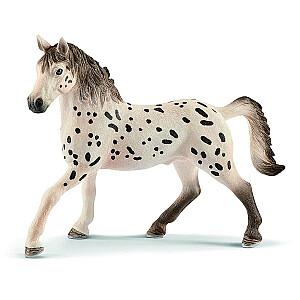 HORSE CLUB Knabstrupper šķirnes ērzelis