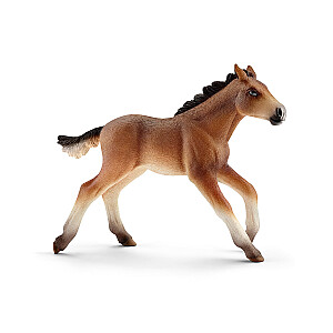 Mustang šķirnes kumeļš