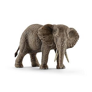 Āfrikas ziloņa mātīte