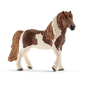 HORSE CLUB Īslandes ponijs
